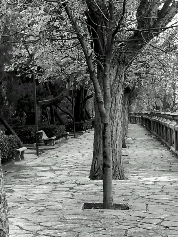 ©arallagianlucafoto
